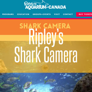Ripley's Aquarium Shark Camera